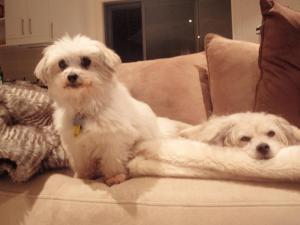 Finders Keepers! My 2 lovely angels, Prissy & Brandy whom I have adopted from the local rescue shelters. Bless these soulful creatures- they have totally changed my life & world!
